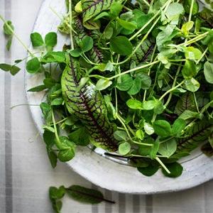 Shakespeare Salad Overhead
